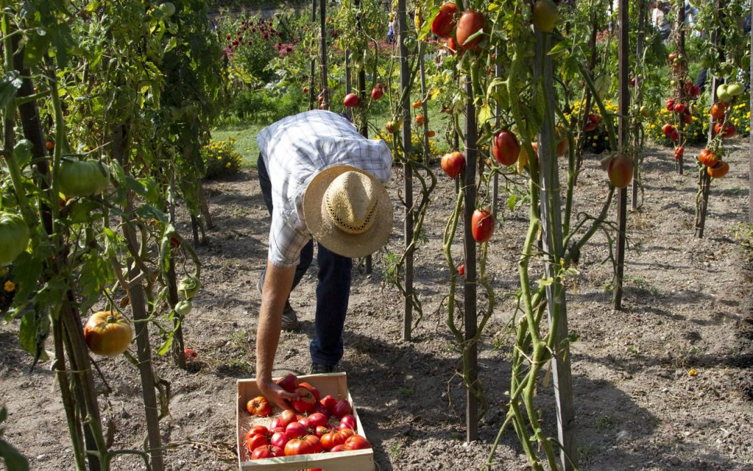 Comment préparer la plantation d'un potager ?
