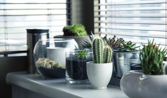Comment pouvez-vous entretenir une plante en hiver?