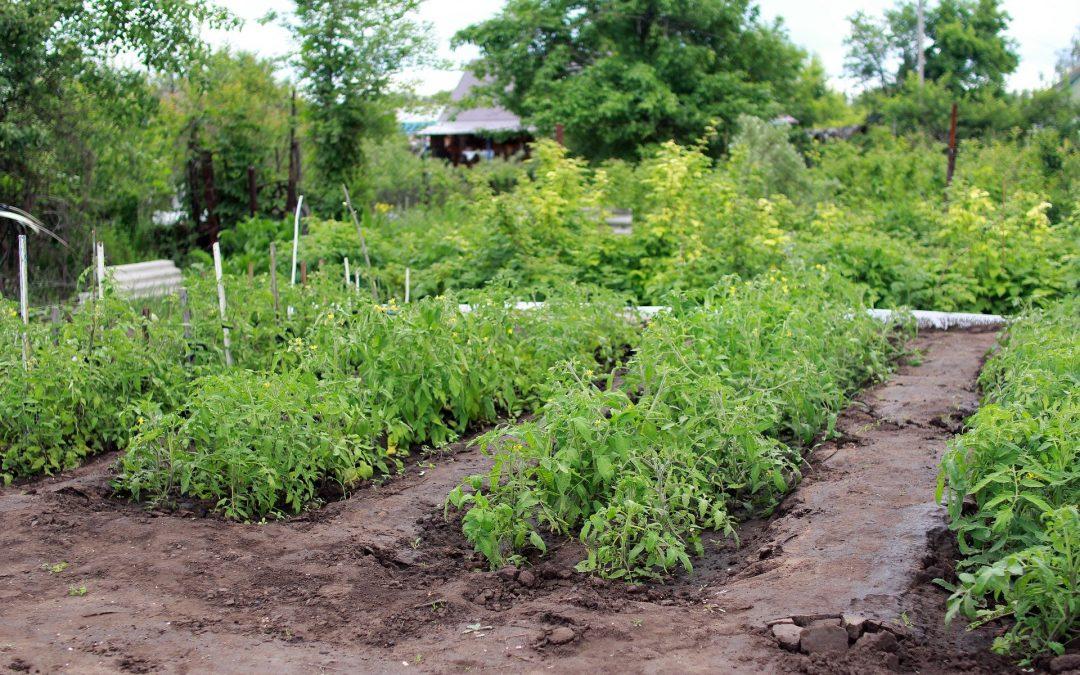 Comment optimiser son jardin?
