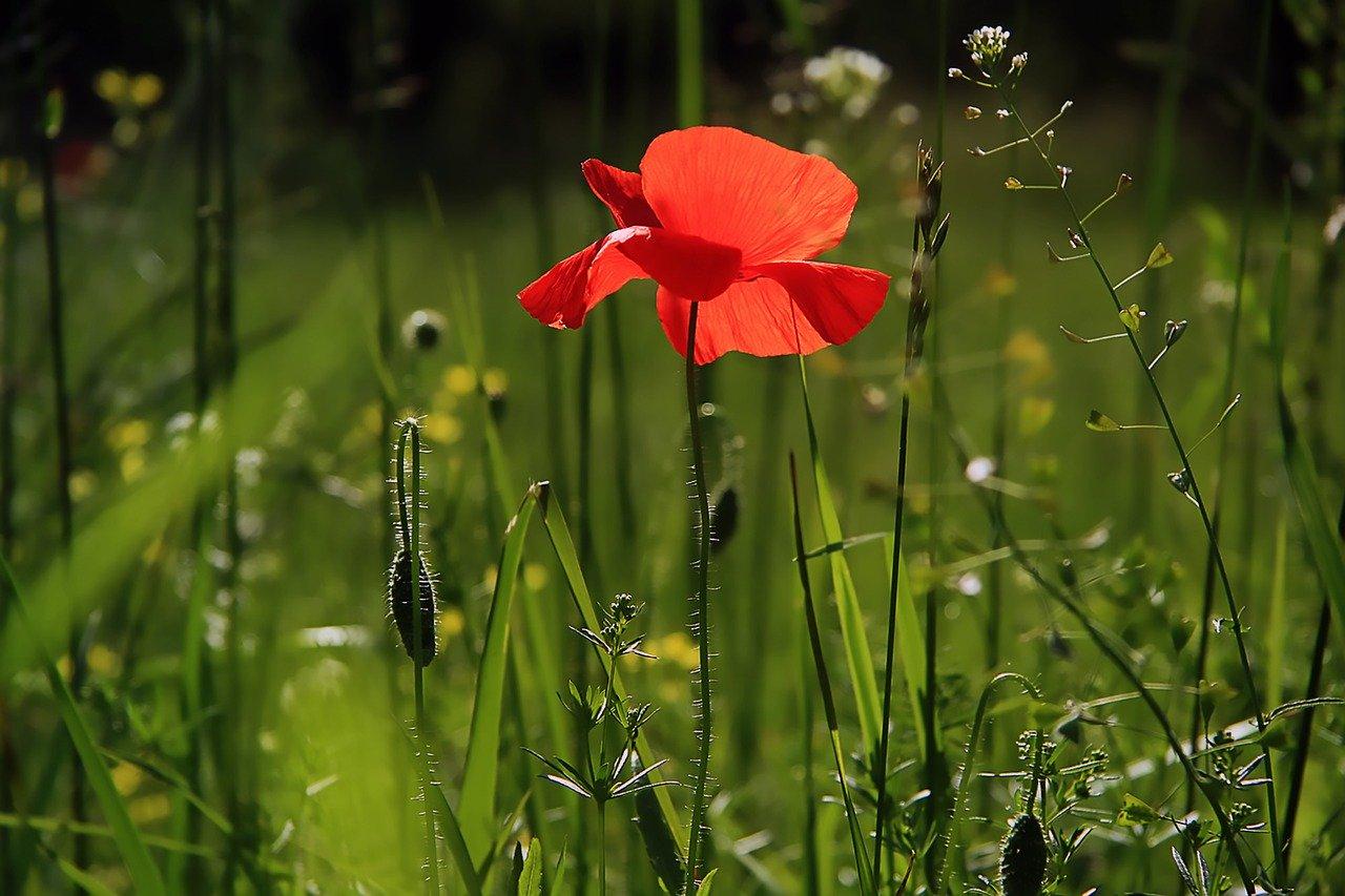 penser aux fleurs dans votre jardin.